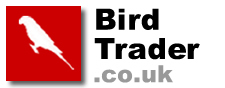 Birds for sale, free bird classifieds